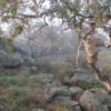 Image Lollipop Creek